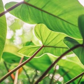 Vegetal pattern ! #repost from @ayacabauatan ! #🌿 #naturalpatterns #pattern #vegetal #dentelle #lace #madeinfrance